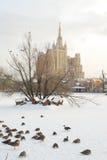 De dierentuin van Moskou Stock Foto's