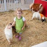 De dierentuin van Petting Stock Foto