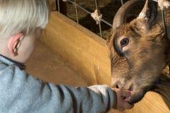 De dierentuin van Petting Royalty-vrije Stock Afbeeldingen