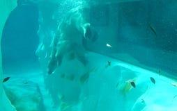 De dierentuin van Tokyo Royalty-vrije Stock Fotografie