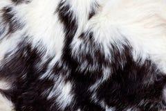 De dierlijke Achtergrond van het Bont Stock Foto's