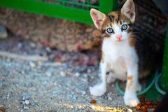 De Dierlijke Huisdierenkat Stock Fotografie