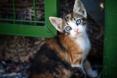 De Dierlijke Huisdierenkat Stock Foto's