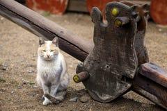 De Dierlijke Huisdierenkat Stock Foto