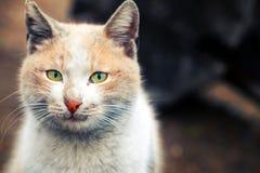 De Dierlijke Huisdierenkat Royalty-vrije Stock Fotografie