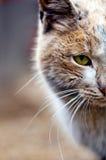 De Dierlijke Huisdierenkat Stock Afbeeldingen