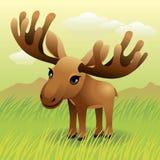 De Dierlijke inzameling van de baby: Amerikaanse elanden Royalty-vrije Stock Afbeelding