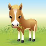 De Dierlijke inzameling van de baby: Paard Stock Afbeeldingen