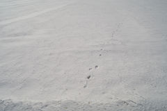 De dierlijke sporen op harde sneeuw Stock Afbeelding