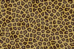 De dierlijke Textuur van het Bont Royalty-vrije Stock Foto's