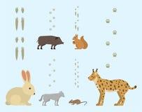 De dierlijke voetafdrukken omvatten zoogdieren en vogels het het spoorwild van de voetdruk stock illustratie