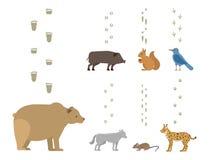 De dierlijke voetafdrukken omvatten zoogdieren en vogels van het het spoorwild van de voetdruk van het spoorstappen vector van he vector illustratie