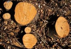 De Differentssecties bomenstompen cutted enkel royalty-vrije stock foto's