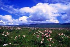 De Diffuse wildernis van plateaubloemen die hij heeft besteed royalty-vrije stock foto