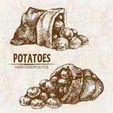 De digitale vector gedetailleerde aardappel van de lijnkunst stock illustratie