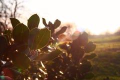 De dikke groene boom gaat backlight door zon weg royalty-vrije stock afbeeldingen