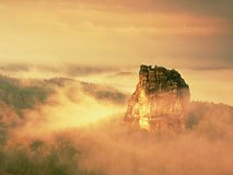 De dikke mist slingert tussen rotsen en strook over hoge bomen in nette bosfeedageraad in stille rotsen Royalty-vrije Stock Fotografie