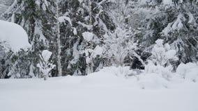 De dikke witte sneeuw in de weg in Scandinavië stock footage