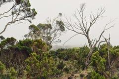 De dimmiga landskapen av elefantkullen, Aberdare spänner, Kenya arkivbilder