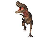 De dinosaurus die van Dino rex aan het attaking loopt Royalty-vrije Stock Foto's