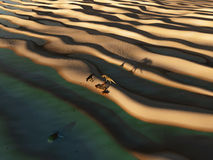 De dinosaurussen snuffelen de woestijn rond Stock Foto's