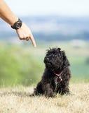 De discipline van het eigenaaronderwijs aan schuldig-kijkt hond stock foto