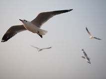 De discretie van de vogels die in de hemel vliegen royalty-vrije stock fotografie