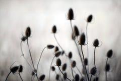 De distels van de herfst Stock Afbeeldingen