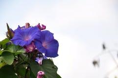 De districten Lumajang van de Wildflowersb29 Heuvel royalty-vrije stock fotografie