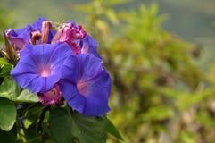 De districten Lumajang van de Wildflowersb29 Heuvel royalty-vrije stock afbeeldingen