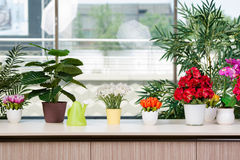 De diverse bloemen schikten in bloempotten bij hme Royalty-vrije Stock Afbeeldingen