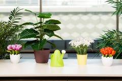 De diverse bloemen schikten in bloempotten bij hme Stock Afbeelding