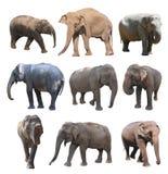 De diverse houdingen van de Aziatische olifant op witte achtergrond, Super Reeks Royalty-vrije Stock Fotografie