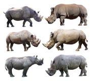 De diverse houdingen van de zwarte rinoceros en witte rinoceros op witte achtergrond stock afbeeldingen