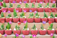 De diverses espèces de cactus sont placées sur les étagères en bois Photo stock