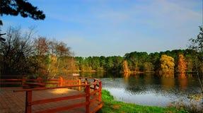 De diversiteit van kleuren van de herfst Nationaal Park, Serebryany Bor Moskou, Rusland Royalty-vrije Stock Fotografie
