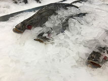 De djupfrysta fiskarna Arkivfoto