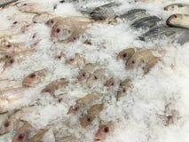 De djupfrysta fiskarna Arkivbild
