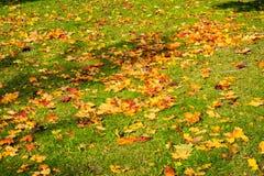 De dode Autumn Fall Leaves Season Laying-Bruine Sinaasappel van het Grondgras Royalty-vrije Stock Foto's