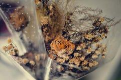 De dode bloem is schoonheid stock fotografie