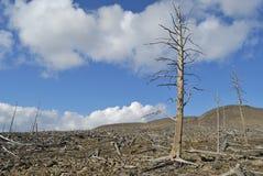 De dode boom stock afbeeldingen