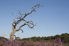 De dode boom op legt vast stock afbeelding