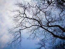 De dode boom van de silhouettak Royalty-vrije Stock Fotografie