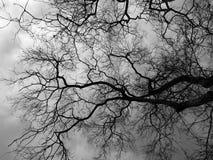 De dode boom van de silhouettak Stock Fotografie