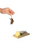 De dode grijze muis door de staart hangt in een man geïsoleerde hand Royalty-vrije Stock Foto's