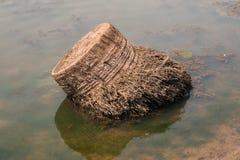De dode kokospalm werd gesneden Royalty-vrije Stock Fotografie