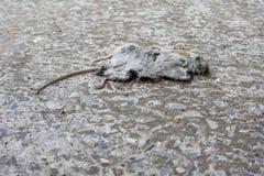 De dode muis Stock Foto's