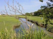 De dode takken volgen het overzicht van een stroom door het moerasland dichtbij Sandwich, doctorandus in de letteren Stock Afbeelding