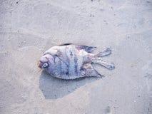 De dode vissen stierven aan de grond op een strand Stock Foto