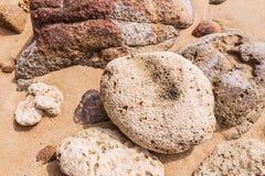 De dode vorm van de koraalbloem, bij Kalim-baai, Phuket, Thailand Royalty-vrije Stock Foto's